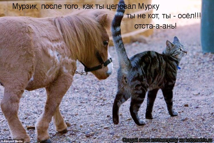 Котоматрица: Мурзик, после того, как ты целовал Мурку ты не кот, ты - осёл!!! отста-а-ань!