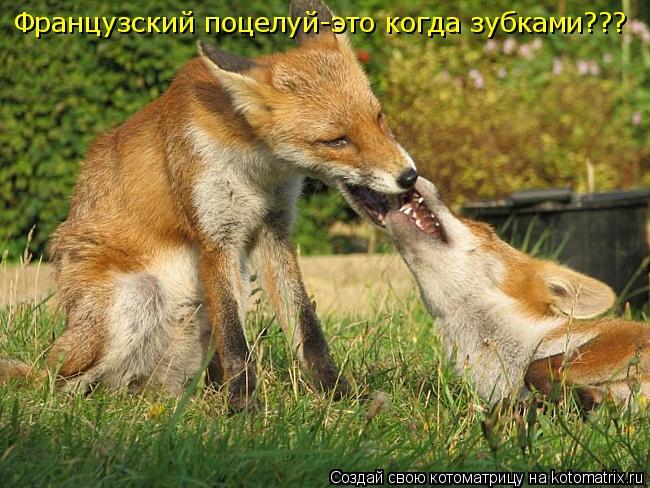 Котоматрица: Французский поцелуй-это когда зубками???
