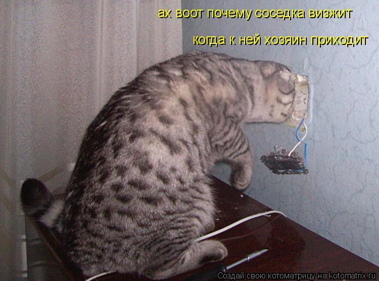 Котоматрица: ах воот почему соседка визжит когда к ней хозяин приходит