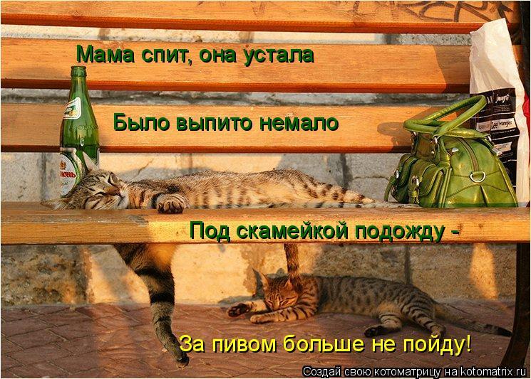 Котоматрица: Мама спит, она устала  Было выпито немало Под скамейкой подожду - За пивом больше не пойду!