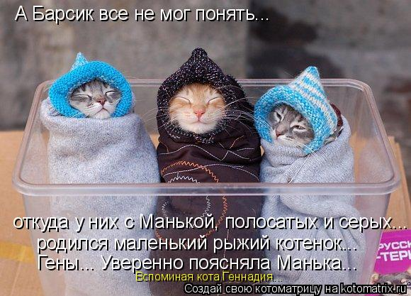 Котоматрица: А Барсик все не мог понять... откуда у них с Манькой, полосатых и серых... родился маленький рыжий котенок... Гены... Уверенно поясняла Манька...