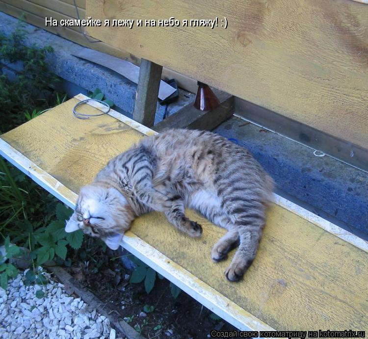 Котоматрица: На скамейке я лежу и на небо я гляжу! :)