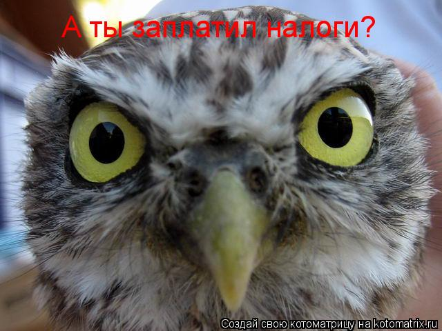 Котоматрица: А ты заплатил налоги?