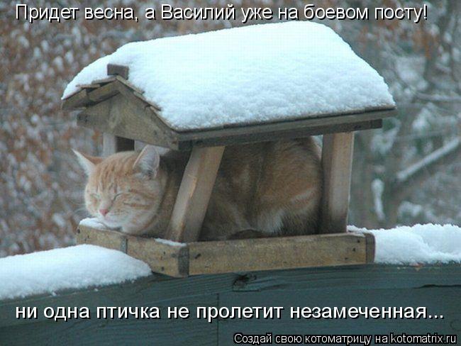 Котоматрица: Придет весна, а Василий уже на боевом посту! ни одна птичка не пролетит незамеченная...