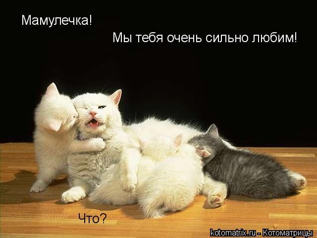 Котоматрица: Мамулечка! Что? Мы тебя очень сильно любим!