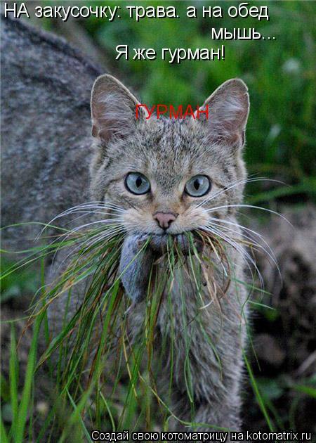 Котоматрица: НА закусочку: трава. а на обед мышь... Я же гурман! ГУРМАН