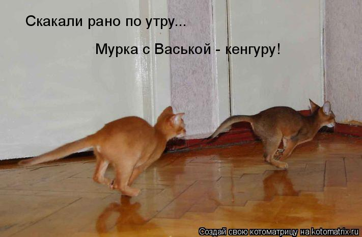 Котоматрица: Скакали рано по утру... Мурка с Васькой - кенгуру! Мурка с Васькой - кенгуру!