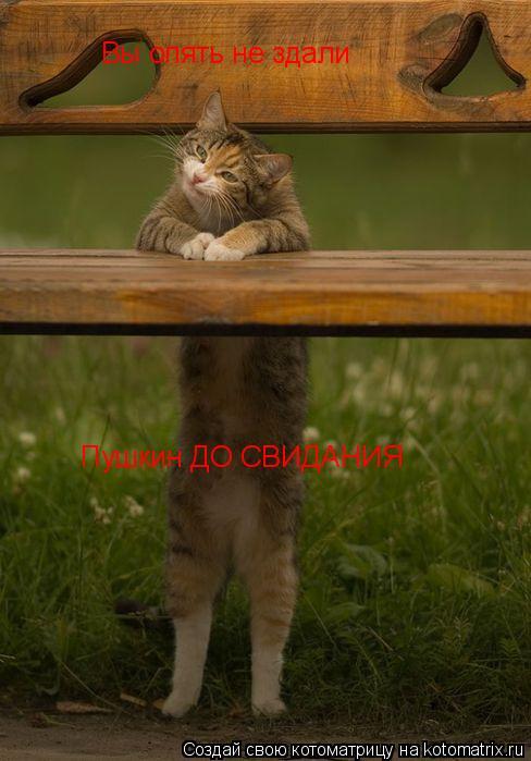 Котоматрица: Вы опять не здали  Пушкин ДО СВИДАНИЯ