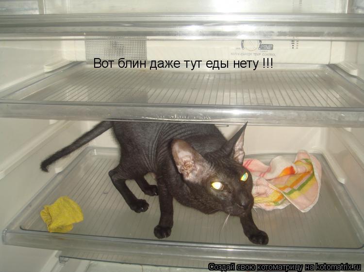 Котоматрица: Вот блин даже тут еды нету !!!