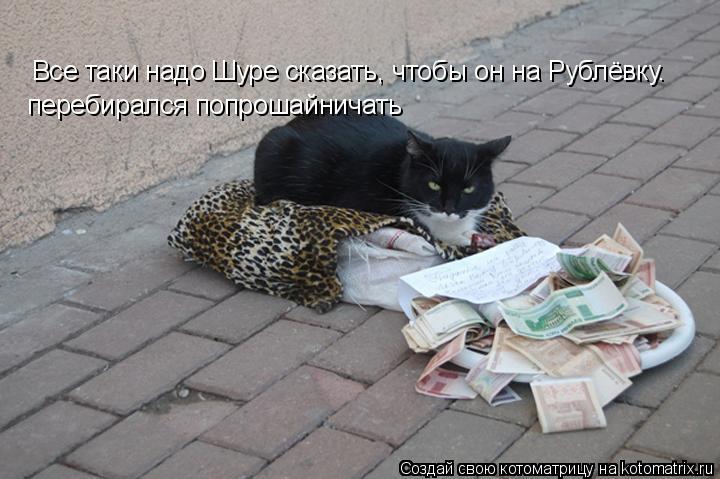 Котоматрица: Все таки надо Шуре сказать, чтобы он на Рублёвку. перебирался попрошайничать