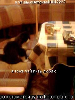 Котоматрица: а чё вы смотрите!!!!!!???? я тоже чай пить люблю!