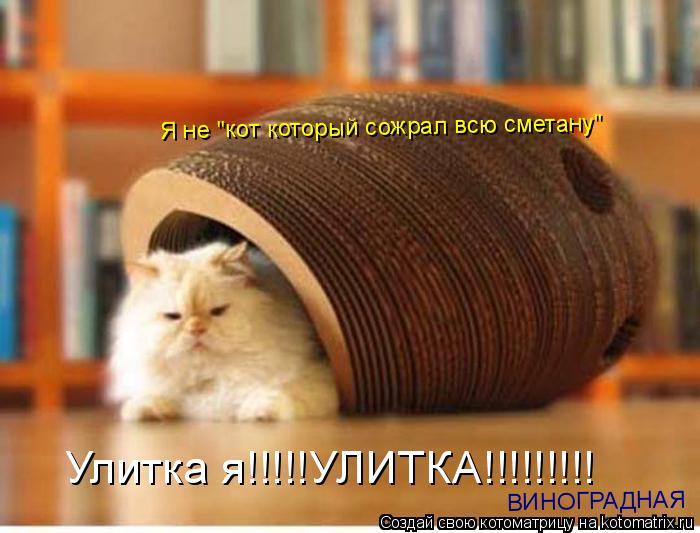 """Котоматрица: Улитка я!!!!!УЛИТКА!!!!!!!!! Я не """"кот который сожрал всю сметану"""" ВИНОГРАДНАЯ"""