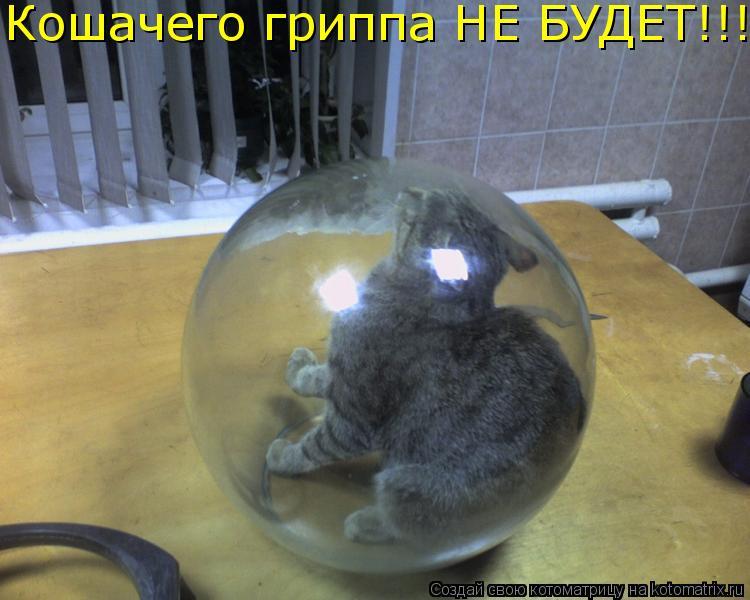 Котоматрица: Кошачего гриппа НЕ БУДЕТ!!!