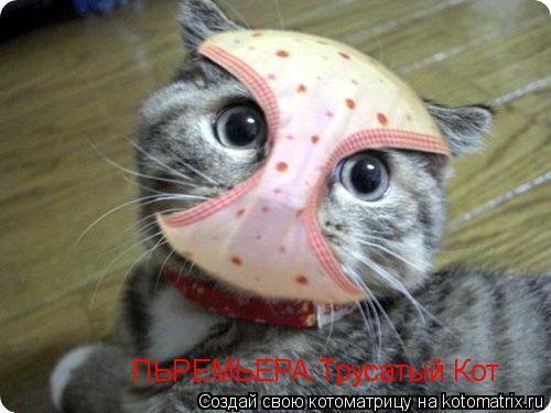 Котоматрица: ПЬРЕМЬЕРА:Трусатый Кот