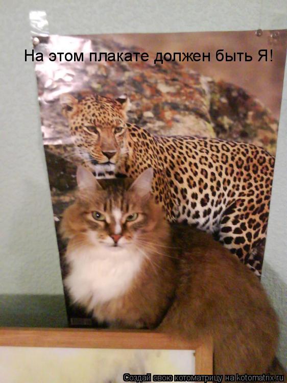 Котоматрица: На этом плакате должен быть Я!