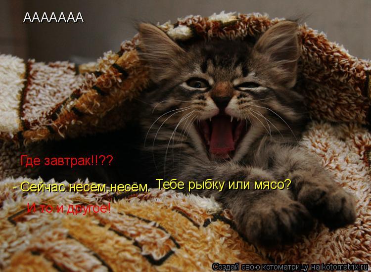 http://kotomatrix.ru/images/lolz/2010/02/05/478581.jpg