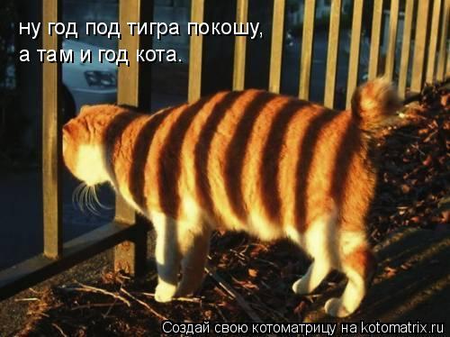 Котоматрица: ну год под тигра покошу, а там и год кота.
