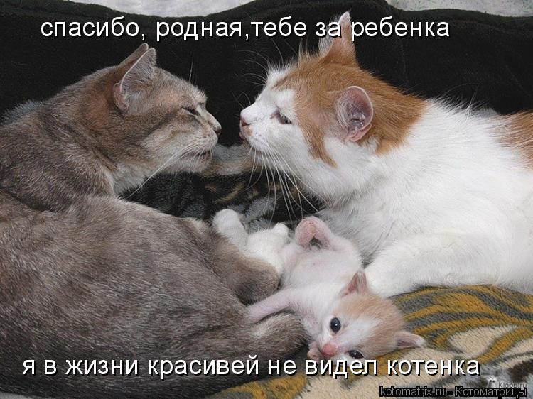 Котоматрица: спасибо, родная,тебе за ребенка я в жизни красивей не видел котенка