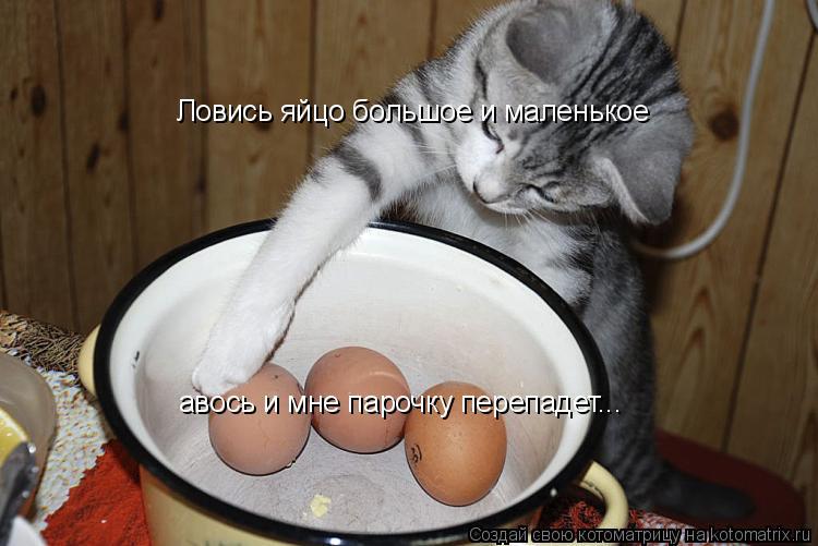 Футанари с огромными яйцами 25 фотография