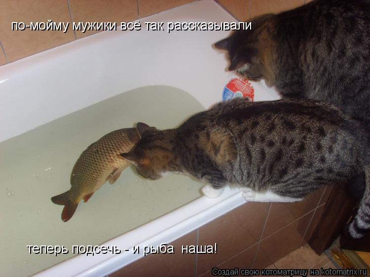 Котоматрица: по-мойму мужики всё так рассказывали теперь подсечь - и рыба  наша!
