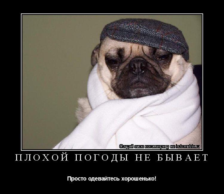 Котоматрица: Плохой погоды не бывает Просто одевайтесь хорошенько!