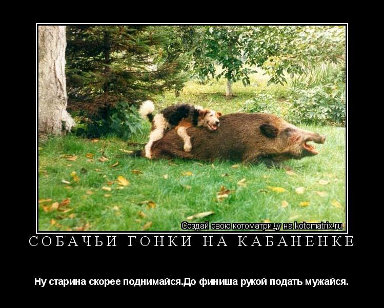 Котоматрица: собачьи гонки на кабаненке Ну старина скорее поднимайся.До финиша рукой подать мужайся.