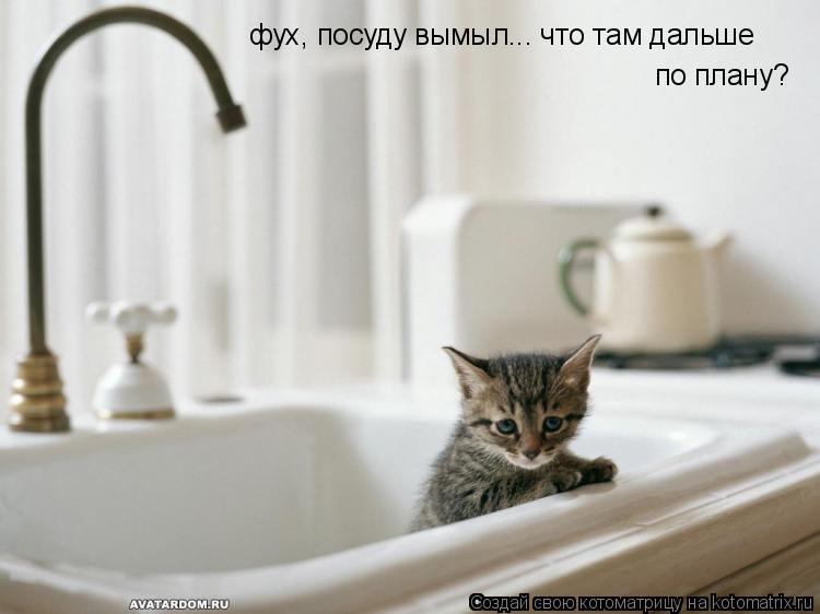 Котоматрица: фух, посуду вымыл... что там дальше по плану?