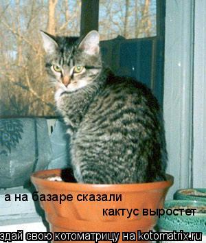 Котоматрица: а на базаре сказали  кактус выростет