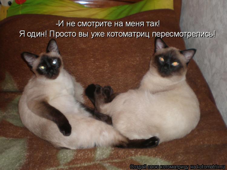 Котоматрица: -И не смотрите на меня так! Я один! Просто вы уже котоматриц пересмотрелись!