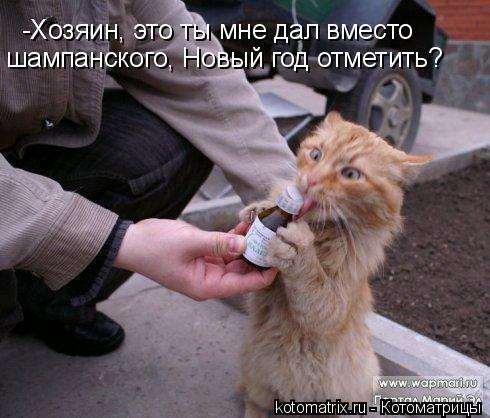 Котоматрица: -Хозяин, это ты мне дал вместо  шампанского, Новый год отметить?