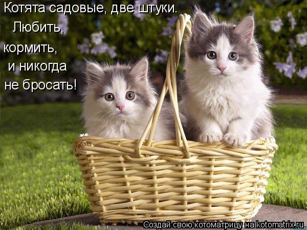 Котоматрица: Котята садовые, две штуки. Любить, кормить, и никогда  не бросать!