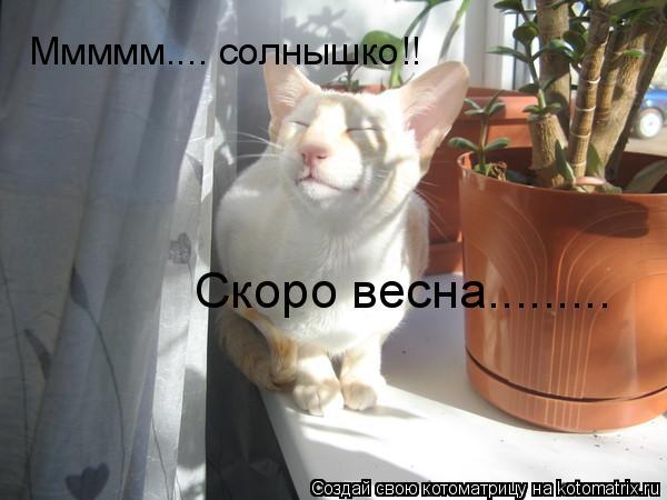 Котоматрица: Ммммм.... солнышко!! Скоро весна.........