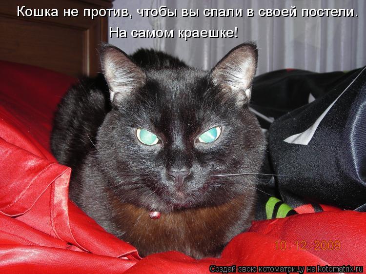 Котоматрица: Кошка не против, чтобы вы спали в своей постели.  На самом краешке!