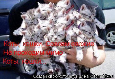 Котоматрица: Коты, кошки… Совсем свежие… Не проходим мимо Коты, кошки...
