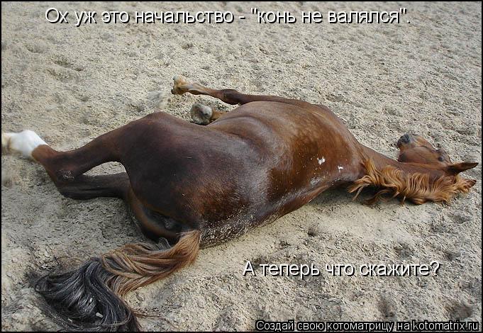 """Котоматрица: Ох уж это начальство - """"конь не валялся"""".   А теперь что скажите?"""