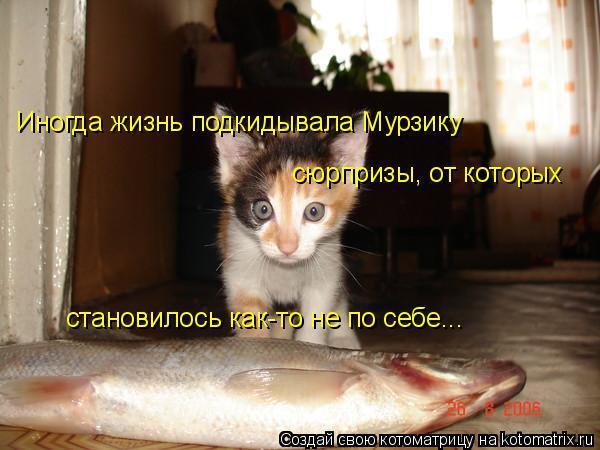 Котоматрица: Иногда жизнь подкидывала Мурзику сюрпризы, от которых становилось как-то не по себе...