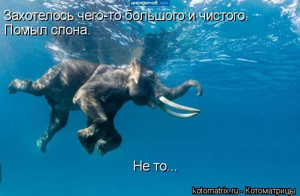 Котоматрица: Захотелось чего-то большого и чистого.  Помыл слона.  Не то...