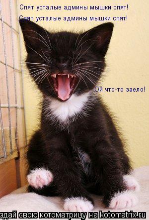 Котоматрица: Спят усталые админы мышки спят! Спят усталые админы мышки спят! Ой,что-то заело!