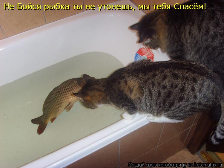 Котоматрица: Не Бойся рыбка ты не утонешь, мы тебя Спасём!