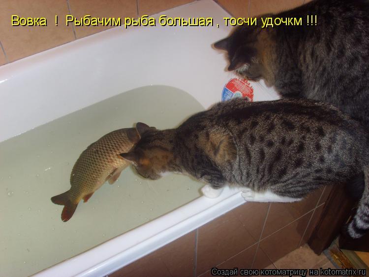 Котоматрица: Вовка  !  Рыбачим рыба большая , тосчи удочкм !!!