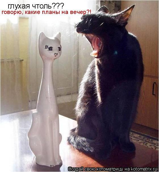 Котоматрица: глухая чтоль??? говорю, какие планы на вечер?!