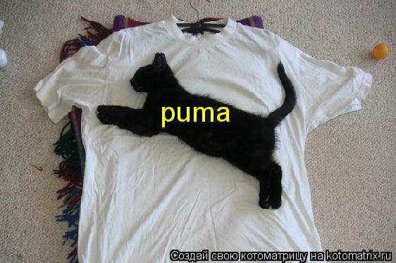 Котоматрица: puma
