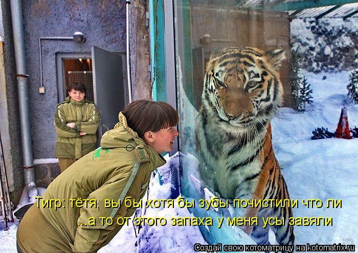 Котоматрица: Тигр: тётя, вы бы хотя бы зубы почистили что ли ...а то от этого запаха у меня усы завяли