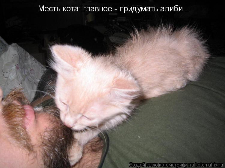Котоматрица: Месть кота: главное - придумать алиби...