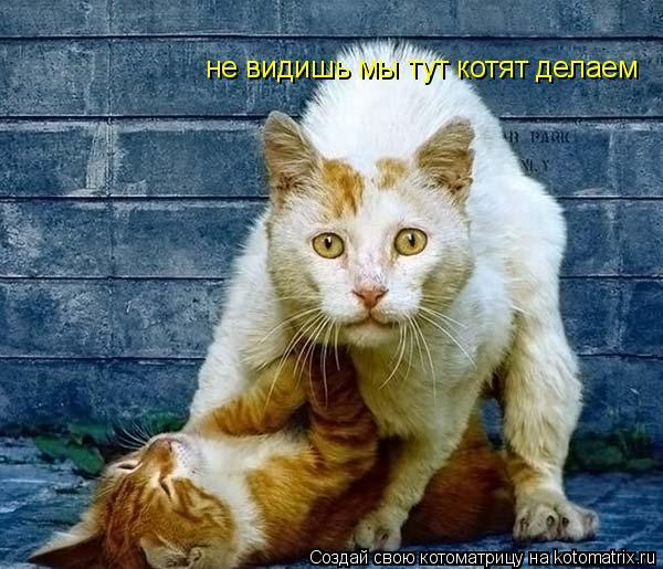 Котоматрица: не видишь мы тут котят делаем