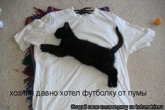 Котоматрица: хозяин давно хотел футболку от пумы