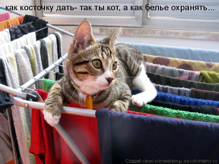 Котоматрица: как косточку дать- так ты кот, а как белье охранять...