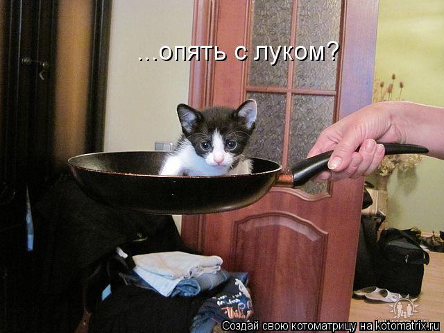 Котоматрица: ...опять с луком?