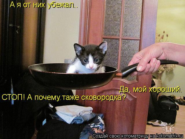 Котоматрица: А я от них убежал.. А я от них убежал.. Да, мой хороший. СТОП! А почему таже сковородка?