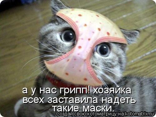 Котоматрица: а у нас грипп! хозяйка всех заставила надеть такие маски.